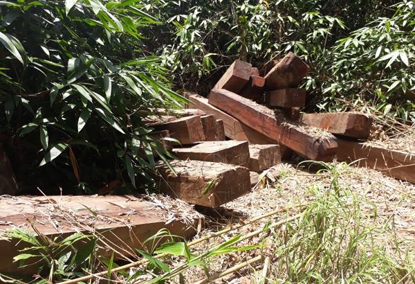 Xâm nhập bãi gỗ lậu gần đồn biên phòng ở Kon Tum