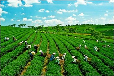 Kinh tế xanh là xu hướng phát triển và là sự lựa chọn của nhiều quốc gia trên thế giới.