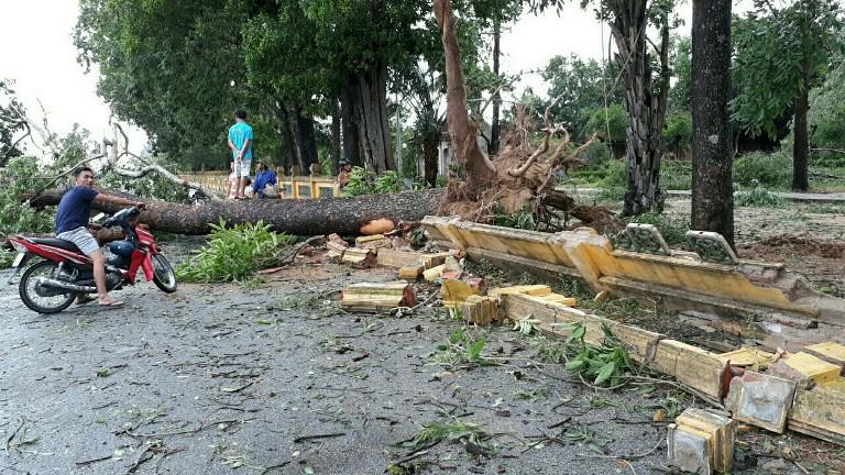 Tại nhiều địa phương, mưa bão cũng làm trúc đỗ nhiều cây cối