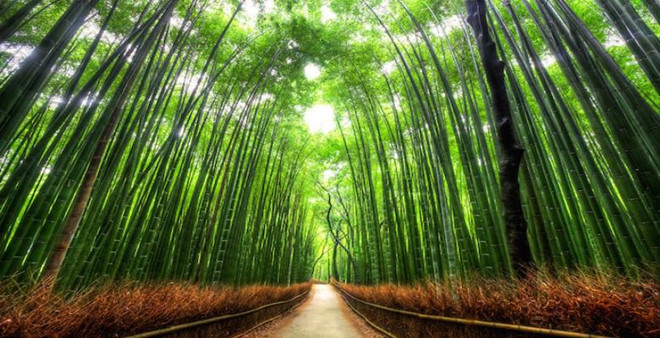Bamboo_trail