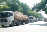 Xi măng Hoàng Mai cam kết sẽ không cấp hàng vượt tải trọng xe