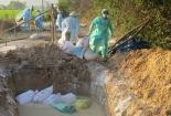 Nghệ An xuất hiện ổ dịch H5N1, tiêu hủy khẩn 500 con gia cầm