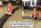 Video: Bé trai Việt Nam 3 tuổi cưỡi trăn gây 'sốt' báo nước ngoài
