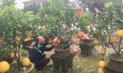 Vựa cây cảnh Văn Giang đắt hàng ngày cận Tết