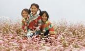 Tin mới lễ hội hoa tam giác mạch tỉnh Hà Giang 2016