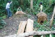 Bình Định: Khởi tố vụ phá rừng phòng hộ ở Vĩnh Thạnh