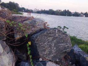 Cận cảnh vườn rau xanh tốt bên trong dự án lấn sông Đồng Nai
