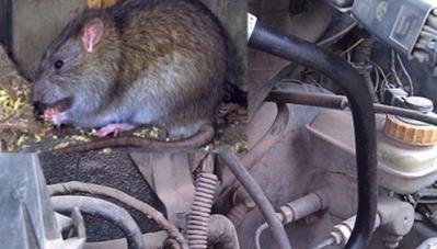 Kinh nghiệm chống chuột, côn trùng đột nhập vào xe