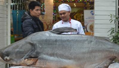 'Thủy quái' 120kg giá hơn 100 triệu đồng bị xẻ thịt để ăn Tết