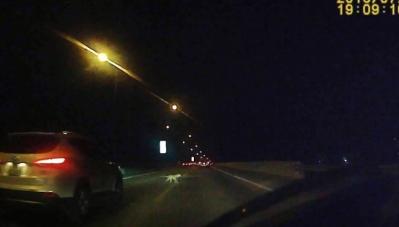 Tai nạn hy hữu trên đường cao tốc, Suzuki bị vỡ cản trước