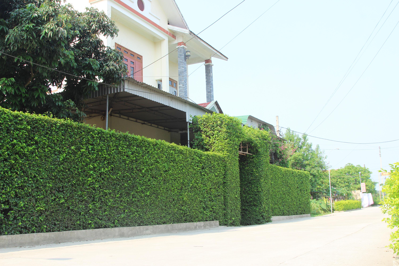 Các cổng nhà và hàng rào được làm từ cây Găng Bống, cây Duối thẳng tắp, vuông vắn tô điểm làng quê yên bình.