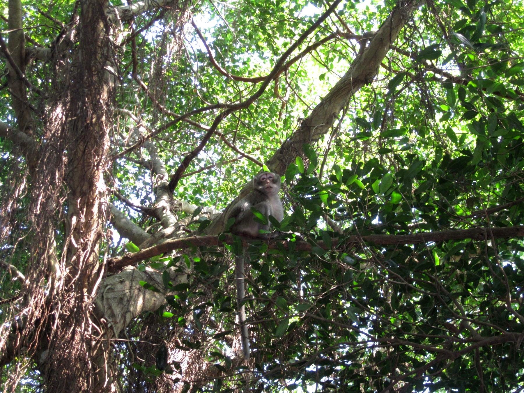 Trằm Trà Lộc có hệ sinh thái đa dạng, phong phú và quý hiếm đã tồn tại hàng trăm năm nay