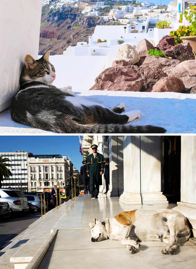 7. Người Hy Lạp thích ngủ trưa.  Vì khí hậu nóng và truyền thống theo đuổi lối sống chậm, người Hy Lạp thường thích ngủ trưa. Họ thức dậy từ 6,7 giờ sáng và sau khi ăn trưa sẽ tranh thủ ngủ một chút. Quy tắc ngủ trưa diễn ra rất nghiêm ngặt, vì vậy nếu bạn phá vỡ chúng, bạn sẽ phải trả tiền phạt.