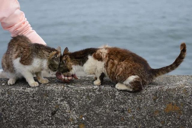 """""""Tan chảy"""" trước những hòn đảo thiên đường của động vật ở Nhật Bản 4"""