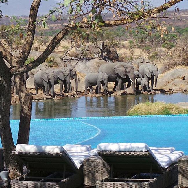 Four Seasons Safari Lodge Serengeti, Tanzania: Bể bơi tại khu nghỉ dưỡng Four Seasons Safari Lodge Serengeti nhìn ra hồ nước thường xuyên có voi lui tới.