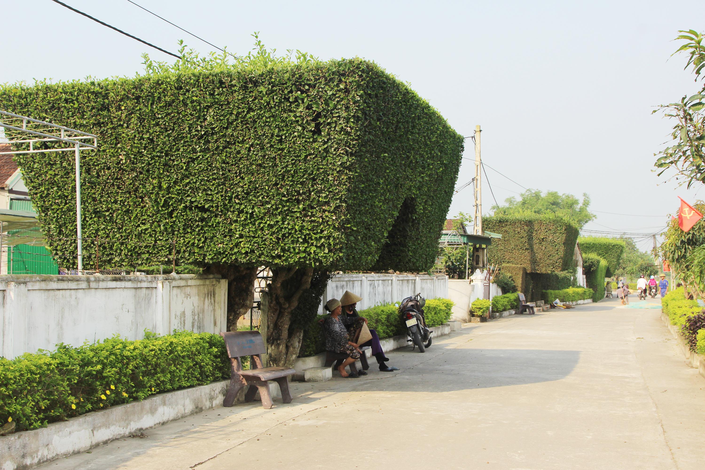 """Về xóm Châu Nội, Châu Trinh của xã Tùng Ảnh, huyện Đức Thọ, tỉnh Hà Tĩnh du khách sẽ không khỏi """"sốc"""" khi chứng kiến hàng loạt cổng nhà """"độc nhất vô nhị"""" được làm từ cây xanh."""