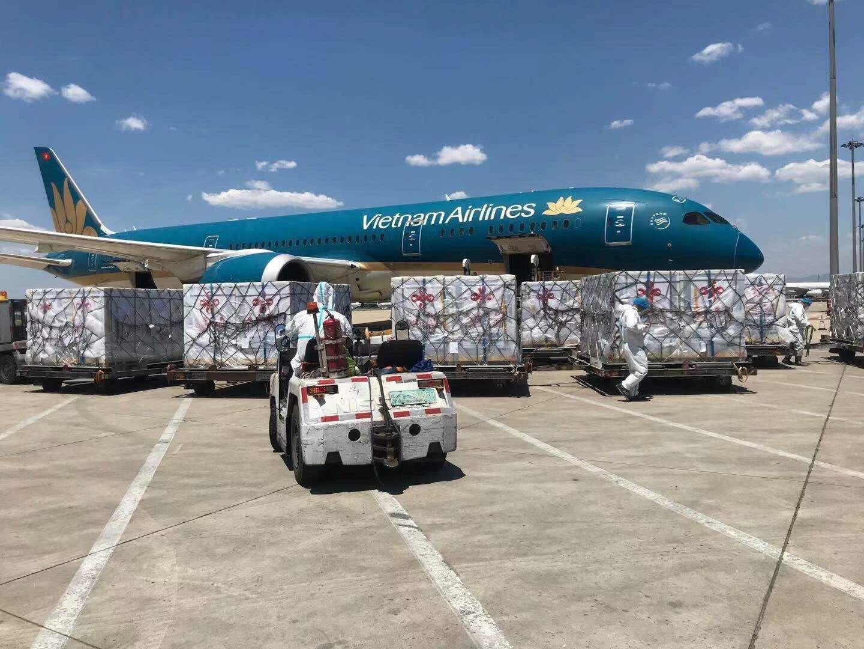 Vietnam Airlines đã bố trí riêng một chiếc Boeing 787- một trong những tàu bay lớn, hiện đại nhất của hãng - để chở lô vaccine và vật tư tiêm chủng này