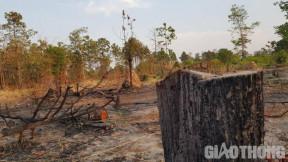 Video: Tan hoang rừng vùng biên giới Ia Mơr