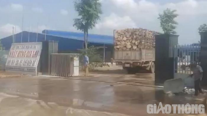Bất thường đấu giá cao su ở Kon Tum: Rầm rộ khai thác, vô tư chở quá tải 4