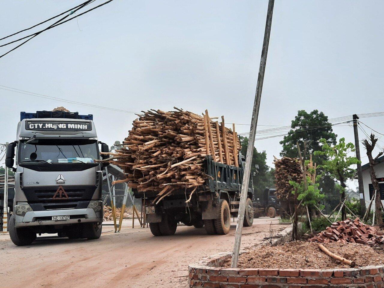 Theo ghi nhận của PV Báo Giao thông, thời gian gần đây, mặc dù lực lượng chức năng của tỉnh Quảng Ninh vẫn kiểm tra, xử lý, nhưng các xe quá khổ, nghi chở quá tải vẫn xuất hiện trên nhiều tuyến đường, từ các tuyến đường huyện, tỉnh đến quốc lộ và thậm chí cao tốc. Ảnh: Hàng loạt xe chở keo chất cao ngất, cồng kềnh trên tuyến QL18C thuộc địa bàn huyện Hải Hà, tỉnh Quảng Ninh.